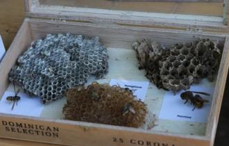 Wann bekommt man schon einmal diese Vielzahl von unterschiedlichen Bienenwaben zu Gesicht?