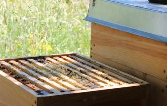 Einer der Bienenstöcke wurde bereits geöffnet.