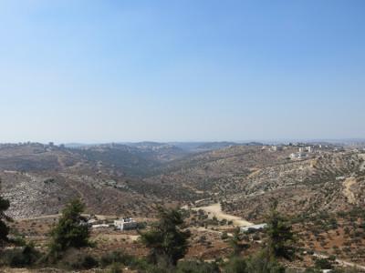 Olivenbäume, die auch Nationalsymbol und Haupteinnahmequelle Palästinas sind, säumen die Hügel um Birzeit.