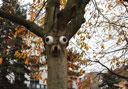 Heute: Der Baum