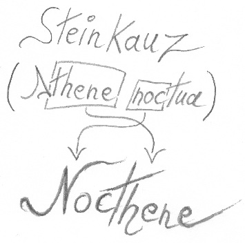 Nocthene Bild 1